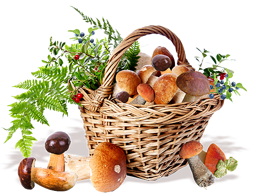 Mushrooms and fresh fruits
